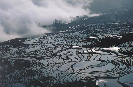 Yuan Yang Paddy Field