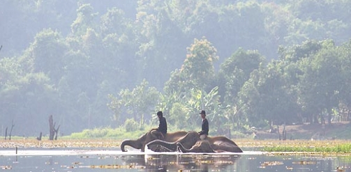Elephant Conservation Camp in Laos