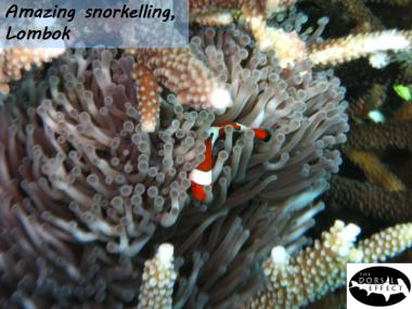 05 Days Marine Conservation @ Lombok