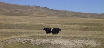 Nomadic Life on the Great Silk Road (from Bishkek to Kashgar)-1