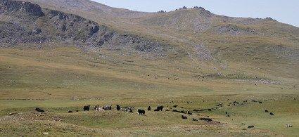 Nomadic Life on the Great Silk Road (from Bishkek to Kashgar)-4