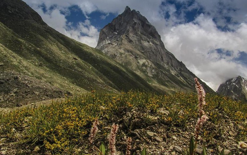 Miyar Valley-1 Big mountains and flower-carpeted Valley