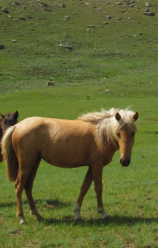 Miyar Valley-9 Albino Horse