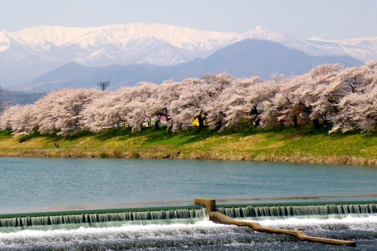 Sakura 2 Yamagata with Mt Gassan on the background