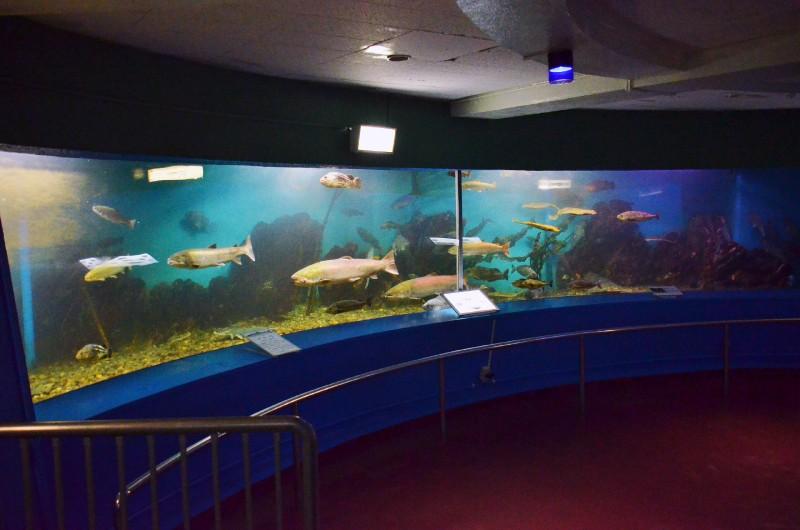 Wakkanai City Noshappu Aquarium-3
