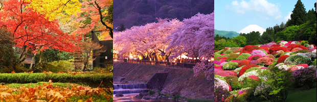Hakone - Enjoy Japan's Four Seasons