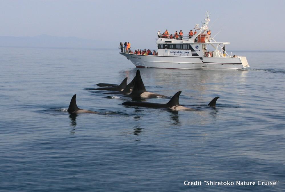 Hokkaido Whale Cruise3