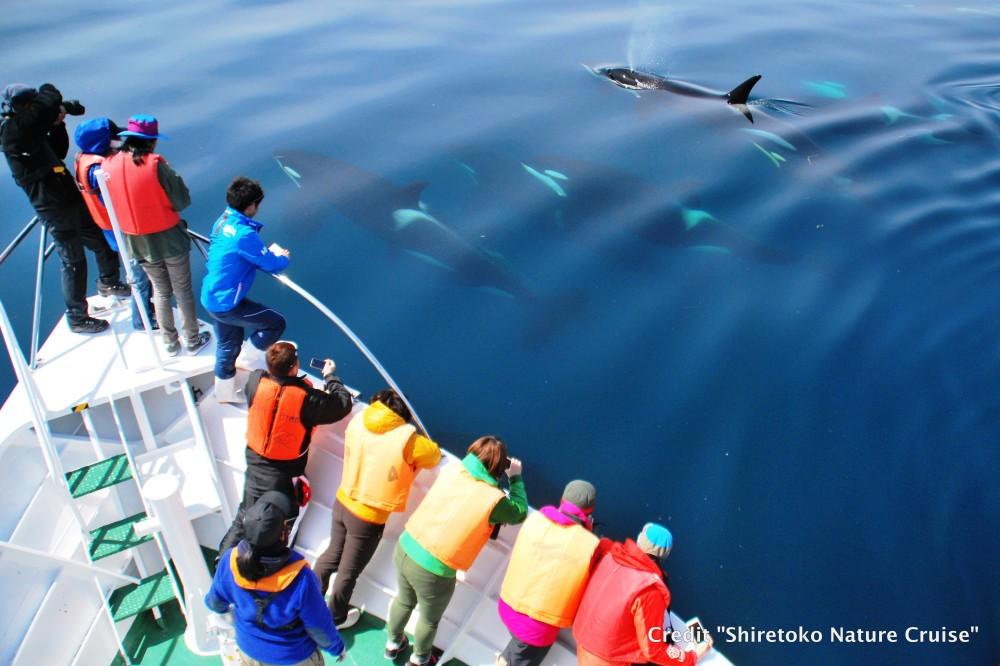 Hokkaido Whale Cruise4