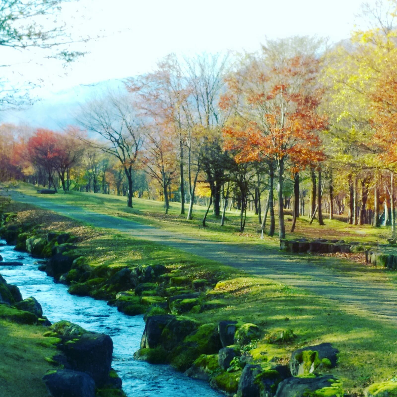 Autumn leaves in Yamagata