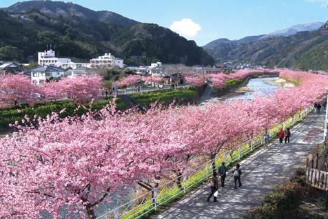 Beyond Tokyo Day Trips