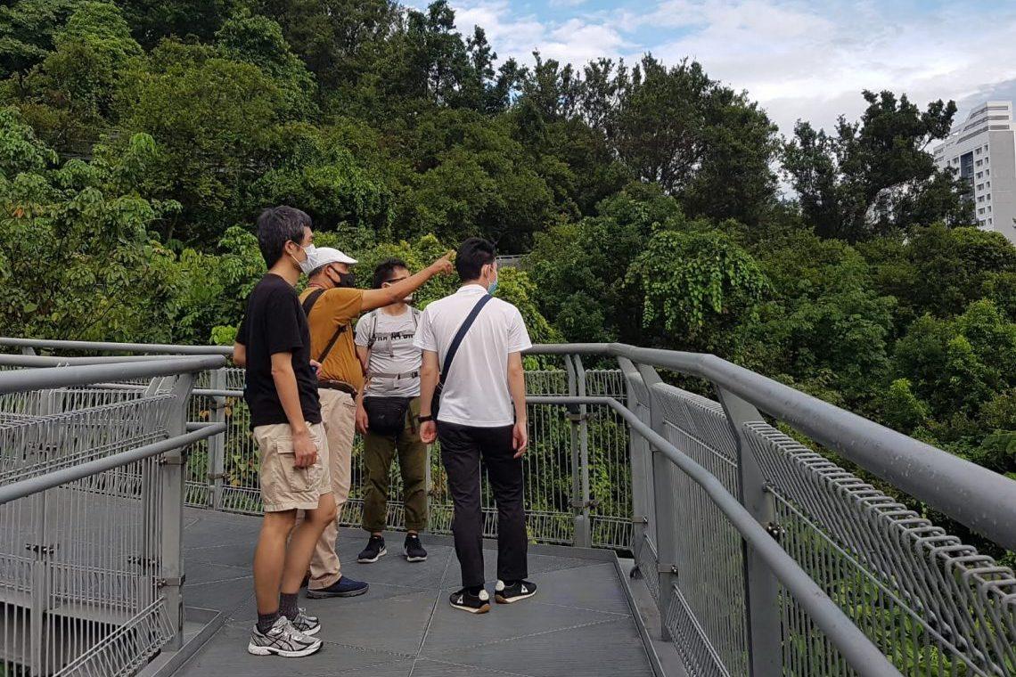 SG Walk Southern Ridges-Forestwalk