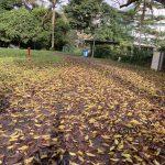 SG Walk My Queenstown and Beyond 09 Jan 2021